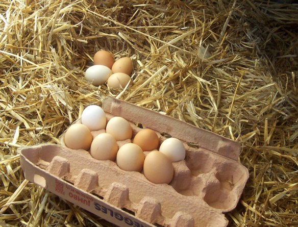 Freerange_eggs